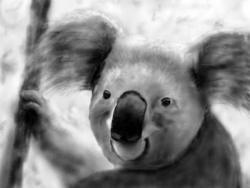 Nakreslím vám zvířátko (1601668125/4)