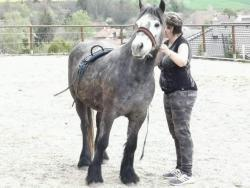 Fell pony (1602315869/5)