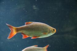 Nástražní rybičky (1602482313/3)