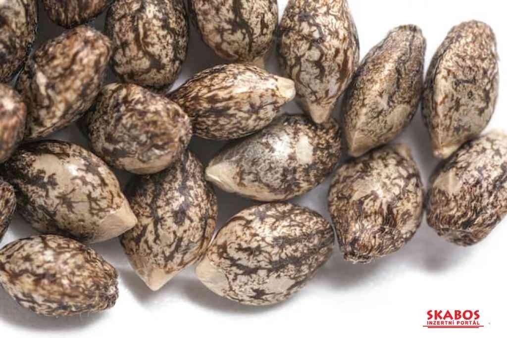 Konopná semínka Spousta odrůd na výběr top kvalita (1/1)