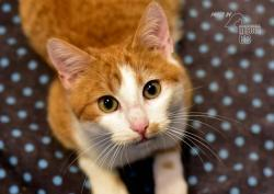 Darujeme nalezené kotě (1607673028/5)