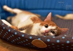 Darujeme nalezené kotě (1607673030/5)