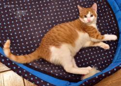 Darujeme nalezené kotě (1607673031/5)