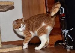 Darujeme nalezené kotě (1607673032/5)