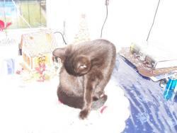 3 měsíční kočička (1609682222/5)