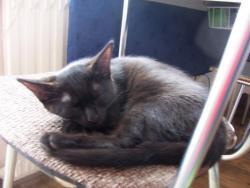 3 měsíční kočička (1609682224/5)