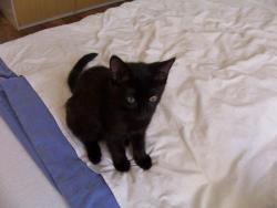 3 měsíční kočička (1609682226/5)