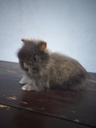 zakrslý králíček Teddy s PP
