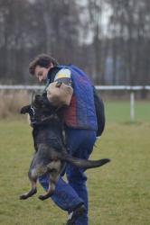Německý ovčák, pes 2 měsíce s PP ihned k odběru (1627675128/5)