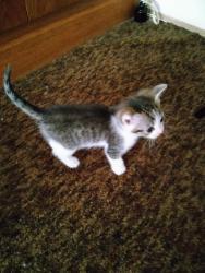Prodám 4 koťata (1633101688/5)