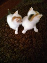 Prodám 4 koťata (1633101689/5)