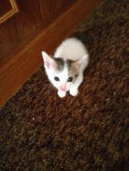 Prodám 4 koťata (1633101691/5)